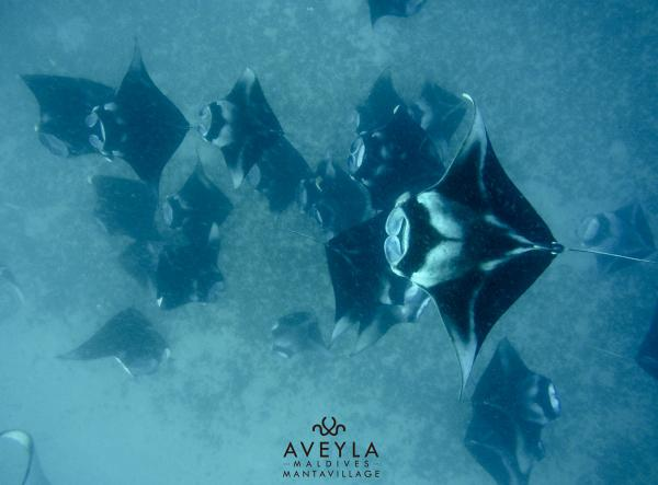 4 NIGHTS 4 DIVES 2 MANTA SNORKELING
